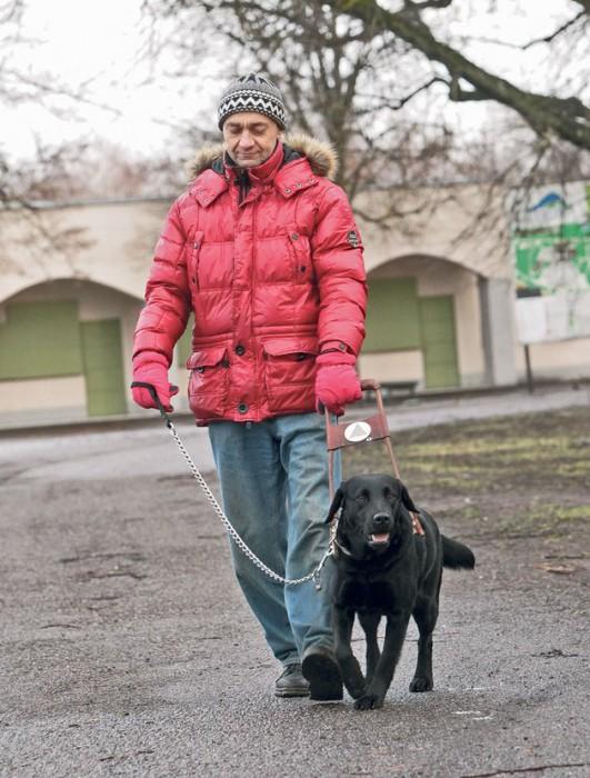 Hiljuti kaheaastaseks saanud juhtkoer Roosi saadab viletsalt nägevat Margo Joosti hea meelega nii väiksel jalutuskäigul Tähtvere pargis, poes kui peremehe töökohas. Eriti vajalik on see noor energiline koer peremehele pimedas, ereda päikese või vihmase ilmaga. Foto: Kristjan Teedema
